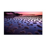 Sunset over large tidal pool  Rectangle Car Magnet