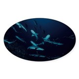 Shoal of Reef Sharks Decal