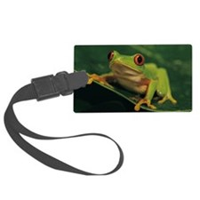 Red eye tree frog Luggage Tag