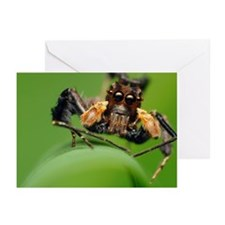 Moustached Portia Greeting Cards (Pk of 10)