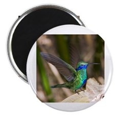 "Humming bird on takeoff 2.25"" Magnet (10 pack)"