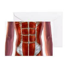 Abdominal Muscles Greeting Cards (Pk of 20)