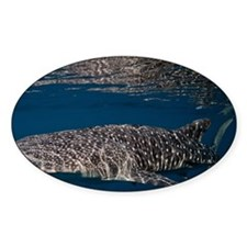 Reflective whaleshark Decal