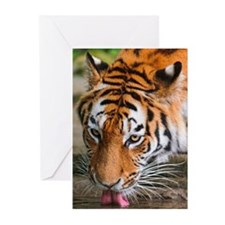 Portrait of Tiger Greeting Cards (Pk of 20)