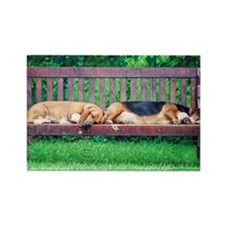 Dogs sleeping on bench Rectangle Magnet