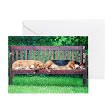 Dogs sleeping on bench Greeting Card