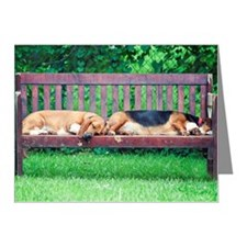 Dogs sleeping on bench Note Cards (Pk of 20)