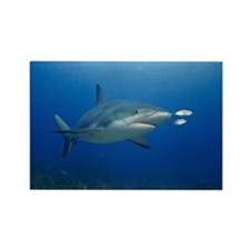 caribbean reef shark. Rectangle Magnet