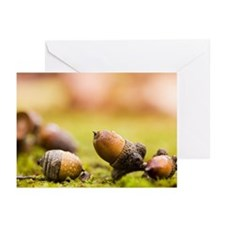 Acorns on Ground Greeting Cards (Pk of 20)