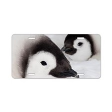 Emperor penguin chicks, Sno Aluminum License Plate