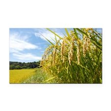 Rice Field Rectangle Car Magnet