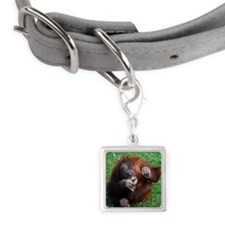 Orangutan chewing, Dublin Zoo Small Square Pet Tag