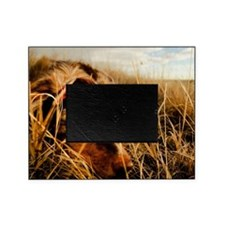 Dog in high grass Picture Frame