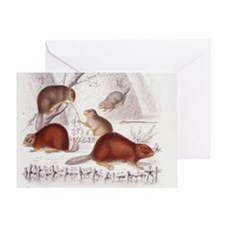 Beaver Family Greeting Card