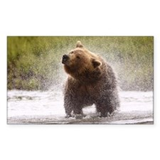 Brown bear shaking fur Decal