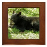 Black Bear Cub Framed Ceramic Tile