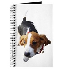 Journal: Looking-Up Basset Hound