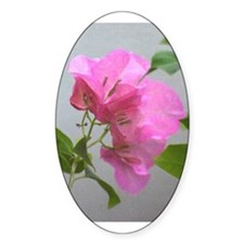 Bougainvillea Oval Decal