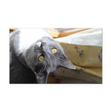 Grey cat Rectangle Car Magnet