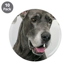 "Great Dane, close-up 3.5"" Button (10 pack)"