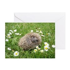 Wonderful Spanish little Greeting Cards (Pk of 10)