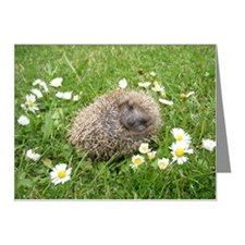 Wonderful Spanish little Hed Note Cards (Pk of 20)