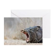 Javelina (collared pecca Greeting Cards (Pk of 10)