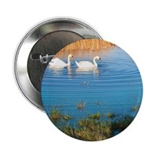 """Swans on pond 2.25"""" Button"""