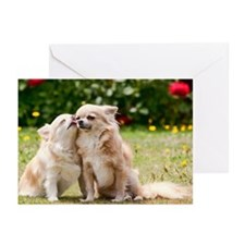 Loving chihuahua dogs Greeting Cards (Pk of 20)