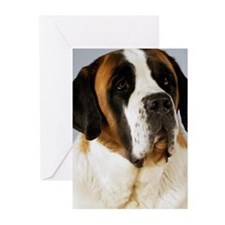 Close-up of a St. Bernar Greeting Cards (Pk of 20)