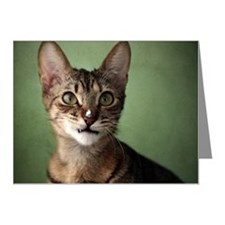 Close-up of cat Note Cards (Pk of 20)