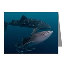 Two whale sharks Note Cards (Pk of 10)