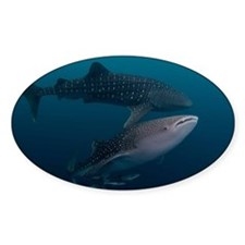 Two whale sharks Decal