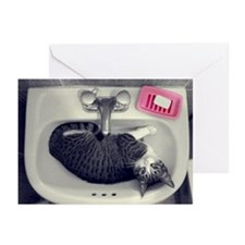Cat in lavatory Greeting Cards (Pk of 10)