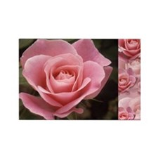 Perfect Rose Rectangle Magnet