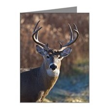 Whitetail Deer buck Note Cards (Pk of 10)