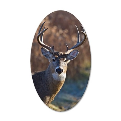 Whitetail Deer buck 35x21 Oval Wall Decal