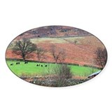 Cows graze near Surprise View Decal