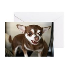 Coco the brown and tan Chihuahua dog Greeting Card