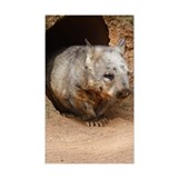 Wombat at burrow, (Vombatus ur Decal