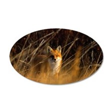 Red fox (Vulpes vulpes) Mani Wall Decal