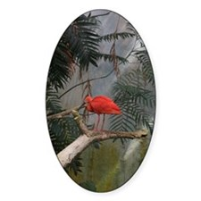 Scarlet Ibis Decal