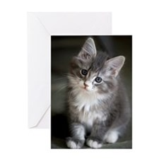 8 week old Maine Coon Kitten poses f Greeting Card