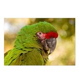 Portrait of a Parrot Postcards (Package of 8)