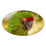 Portrait of a Parrot Decal