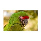 Portrait of a Parrot Car Magnet 20 x 12