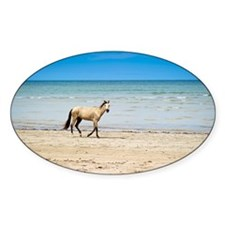 Horse walking on beach agaist blue  Decal
