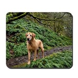 Yellow lab standing on a trail. Mousepad
