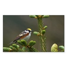 Chestnut-sided Warbler p Decal