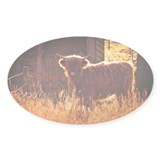 Heilan' Coo Decal